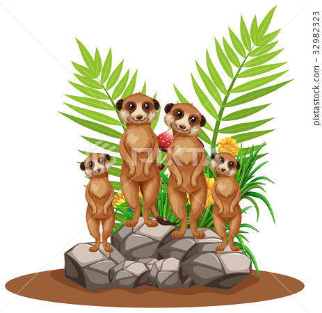 Four meerkats standing on stone 32982323