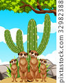 Meerkats standing by the cactus plant 32982388