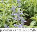 花朵 花 花卉 32982507
