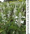 花朵 花卉 花 32982508