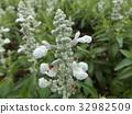 花朵 花卉 花 32982509