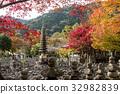 化野念佛寺 楓樹 紅楓 32982839