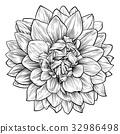 Dahlia or Chrysanthemum Flower Woodcut Etching 32986498