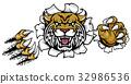 野猫 猫 猫咪 32986536