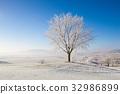 霜 雪 树木 32986899
