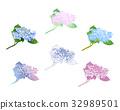 수국, 꽃, 식물 32989501