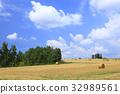 홋카이도 후라노시 수확 마친 보리밭과 나무 32989561