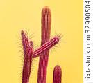 cactus, fashion, minimal 32990504