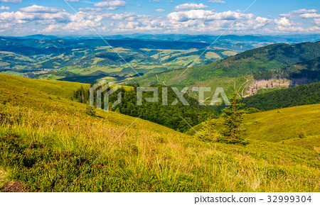 grassy meadow with forest on steep slope 32999304