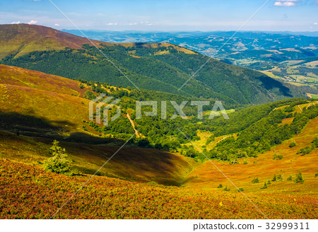 hillside with forest on weathered grassy slope 32999311
