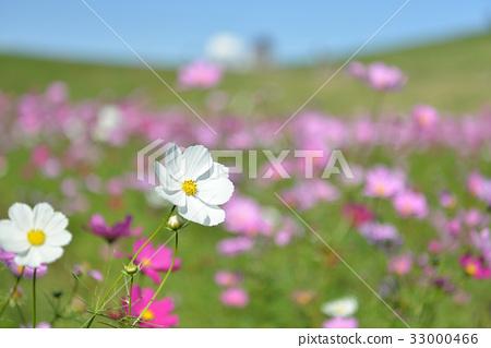 Autumn cherry blossoms of Sai Lake Doman Green Park 33000466