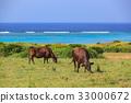 소 이시가키 섬 바다 33000672