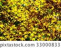 maple, yellow leafe, leaf 33000833