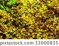 maple, yellow leafe, leaf 33000835