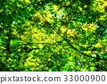 翠绿 鲜绿 黄色 33000900