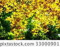 翠绿 鲜绿 黄色 33000901