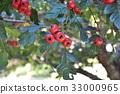 berry, kanazawa, tree 33000965