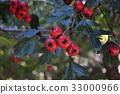 berry, kanazawa, tree 33000966