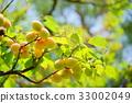열매, 과실, 과일 33002049