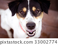 Close up Smiling face of happiness black dog face 33002774