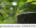 사마귀, 곤충, 벌레 33004240