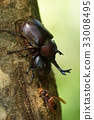 幼虫 蛹 食物 33008495