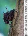 幼虫 蛹 食物 33008506