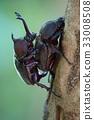 成蟲 幼蟲 蛹 33008508