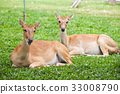 Beautiful deer on green grass 33008790