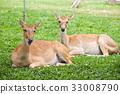 Beautiful deer on green grass 33008790