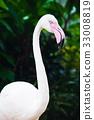 Portrait of Flamingo 33008819