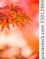 赤い紅葉・もみじ 京都府 33012960
