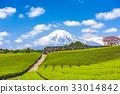 Mt. Fuji and Tea Fields 33014842
