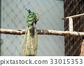 peafowl, avian, peacock 33015353
