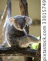 동물원, 코알라, 포유류 33015749
