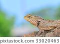 Chameleon on the timber blur background. 33020463