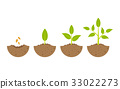 growing plant in process. on white background. 33022273