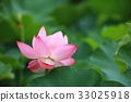 lotus flower, bloom, blossom 33025918