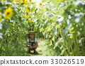 A girl playing in a sunflower field 33026519
