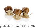 Three garden snails 33030792