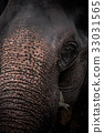 Close-up portrait of an elephant 33031565