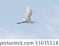 野生鸟类 野鸟 飞行 33035518