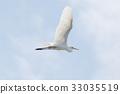 野生鸟类 野鸟 飞行 33035519