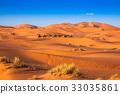 Camel caravan going through the sand dunes  33035861