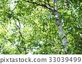 tender green, verdure, green 33039499