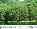 彌遮迦池塘 綠色 背景 33039679