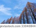 푸른, 하늘, 수목 33040844