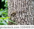 나무 등반, 카나헤비 33040919