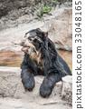 bear, bears, tennoji 33048165
