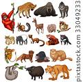 wildlife, animal, vector 33049233